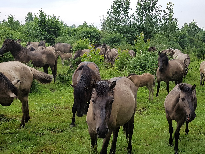 wandelen horsterwold flevoland