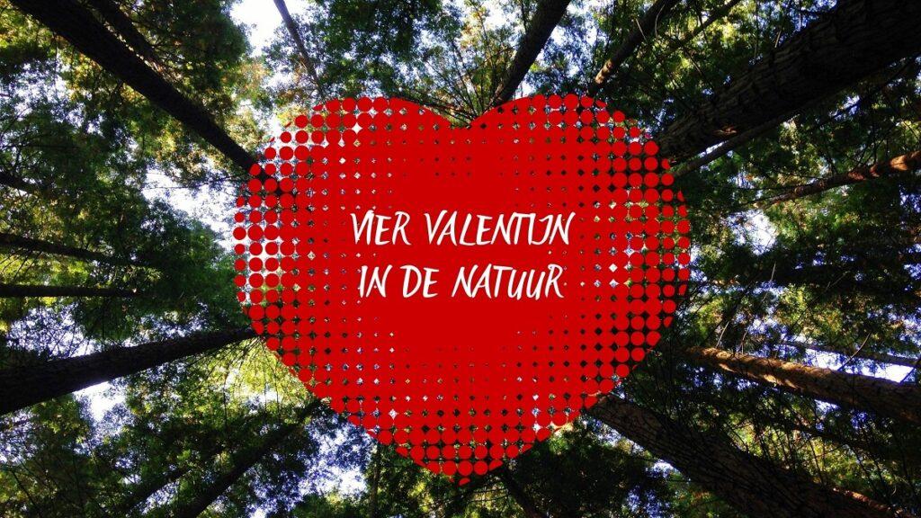 valentijnsarrangementen