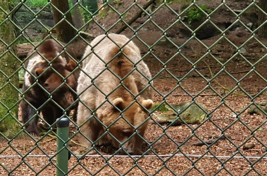 beren ouwehande dierenpark